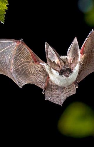 Image solution biodiversité